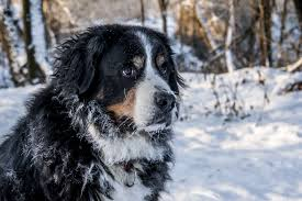 Helpful Tips on Cold Weather Pet Safety